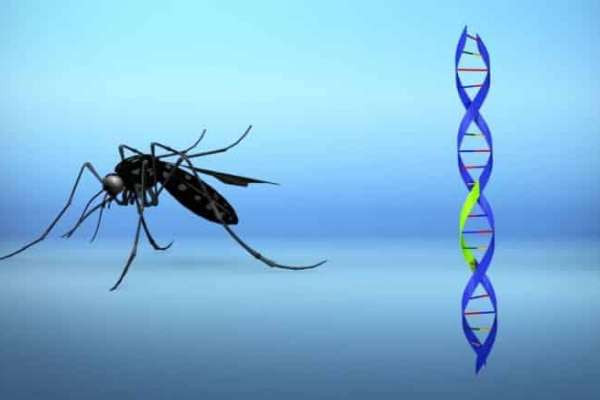 Citizen Fury As One Billion GMO Mosquitos To Be Released In Florida